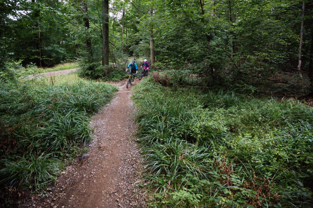 Mountainbiker auf einem Trail